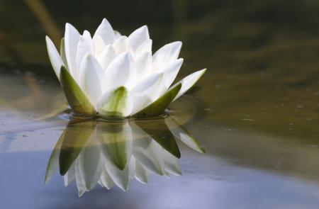 lotus - درمان افسردگی